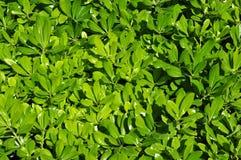 Groen bladerenbehang, achtergrond Royalty-vrije Stock Foto's