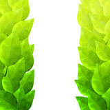 Groen bladerenframe Waterverf artistieke textuur Stock Foto