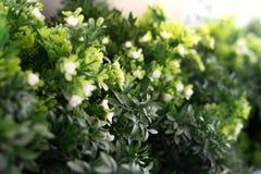 Groen bladerengebladerte en witte bloeminstallatie Stock Foto's