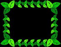 Groen bladerenkader Stock Foto
