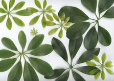 Groen bladpatroon Royalty-vrije Stock Afbeelding