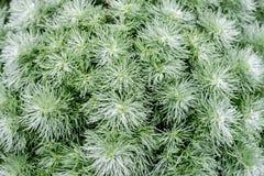 groen bladpatroon als achtergrond Stock Fotografie