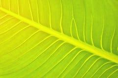 Groen bladpatroon met het effect van de zonsopgangverlichting voor achtergrond Stock Afbeelding