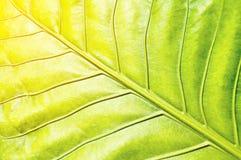 Groen bladpatroon met oranje zacht licht Stock Foto's