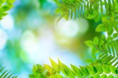 Groen bomen en bladgroen bokeh royalty-vrije stock foto
