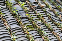 Groen bomen en water op kasteelpiek Royalty-vrije Stock Afbeeldingen