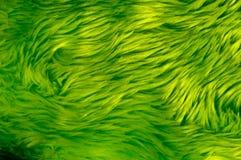 Groen Bont Royalty-vrije Stock Afbeeldingen