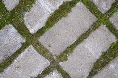 Groen bontmos Royalty-vrije Stock Afbeeldingen