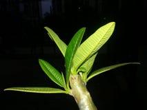 Groen boomblad Stock Afbeeldingen