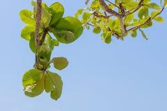 Groen boomblad met blauwe duidelijke hemel royalty-vrije stock fotografie
