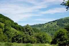 Groen bos Stock Afbeeldingen