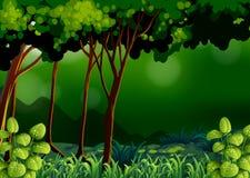 Groen bos stock illustratie