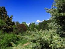 Groen bos Royalty-vrije Stock Afbeelding