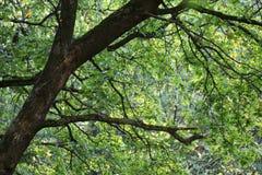 Groen bos Royalty-vrije Stock Foto's