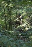 Groen bos Stock Afbeelding