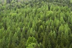 Groen bos bij bewolkt weer Royalty-vrije Stock Afbeelding