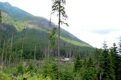 Groen bos bij de rand van de zachte heuvels Stock Fotografie