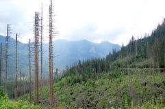 Groen bos bij de rand van de zachte heuvels Royalty-vrije Stock Afbeeldingen