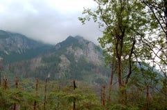 Groen bos bij de rand van de zachte heuvels Royalty-vrije Stock Afbeelding