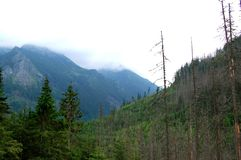 Groen bos bij de rand van de zachte heuvels Stock Foto