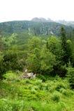 Groen bos bij de rand van de zachte heuvels Royalty-vrije Stock Fotografie