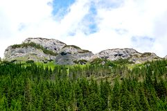 Groen bos bij de rand van de zachte heuvels Stock Foto's