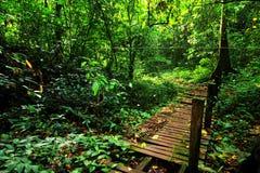 Groen bos bij gomantong stock afbeeldingen