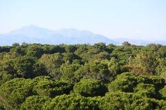 Groen bos en hooggebergte Stock Foto's