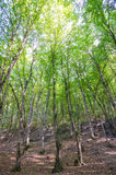 Groen bos in heldere dag Stock Foto's