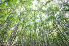 Groen bos in heldere dag Stock Afbeeldingen