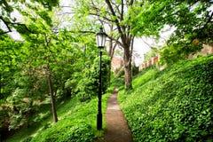 Groen bos met veel bomen en een eenzame straatlantaarn Royalty-vrije Stock Afbeelding