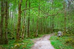 Groen bos met weg Stock Fotografie