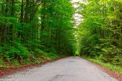 Groen bos met weg in sprintime Stock Foto