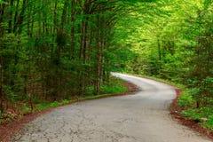 Groen bos met weg in sprintime Stock Afbeeldingen