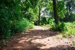 Groen bos met weg in zonnig daglicht Royalty-vrije Stock Afbeeldingen