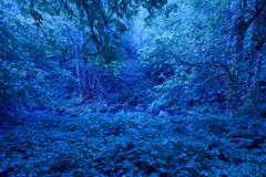 Groen bos onder het maan 's nachts licht lush stock afbeelding