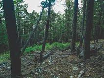 Groen bos op een helling Stock Foto