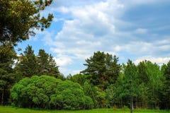 Groen bos, struiken, espberken en blauwe hemel stock afbeelding