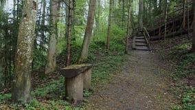 Groen bos in Zwitserland Een kleine houten bank in de Zwitserse boscamerabeweging langs de winkels en aan de rug waar s stock videobeelden