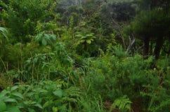 Groen botanisch wildernisbehang stock foto