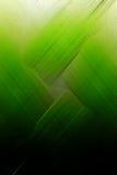 Groen bruis Royalty-vrije Stock Fotografie