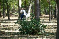Groen Bush in het Park op een achtergrond van bomen en kussend jong paar Stock Fotografie