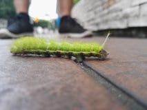 Groen Caterpillar stock afbeeldingen