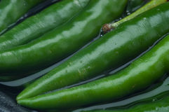 Groen Chili Peppers op water Stock Foto's