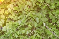 Groen de boom abstract botanisch bos van de bladerenzomer met gele zon stock foto's