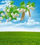 Groen de lentebos in zonstralen Stock Afbeeldingen
