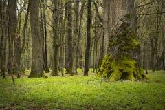 Groen de lentebos in zonstralen royalty-vrije stock foto's