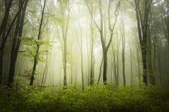 Groen de lentebos in zonstralen royalty-vrije stock afbeelding