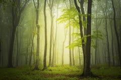 Groen de lentebos in zonstralen stock fotografie