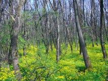 Groen de lentebos in zonstralen stock afbeelding